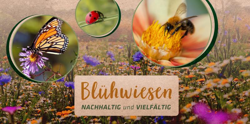 gardigo_homepage_Banner_Seite_Blu-hwiesen_3