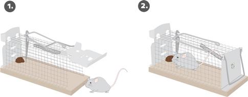 mause lebendfalle k fig gardigo. Black Bedroom Furniture Sets. Home Design Ideas