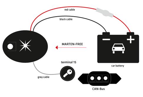 78420_marder-katzen-frei_grafik_web