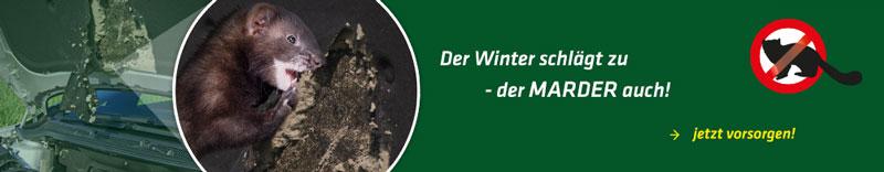 Der Winter schlägt zu - Der Marder auch!