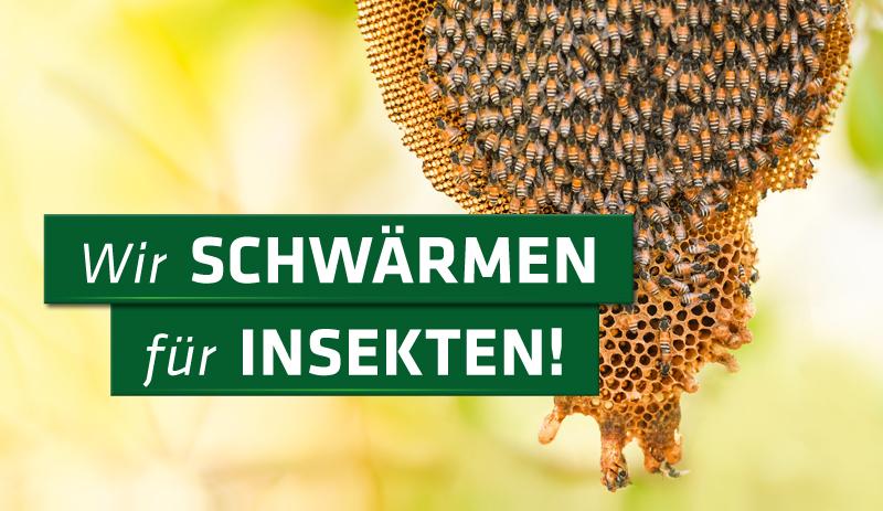 Wir schwärmen für Insekten