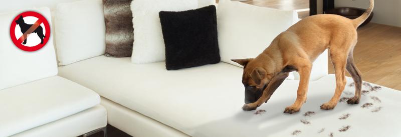 hunde katzenfrei mobil tierabwehr gardigo. Black Bedroom Furniture Sets. Home Design Ideas