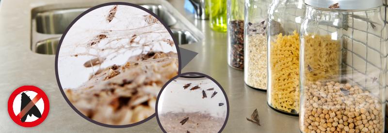 Lebensmittel Mottenfalle Lebensmittel Mottenfalle Motte