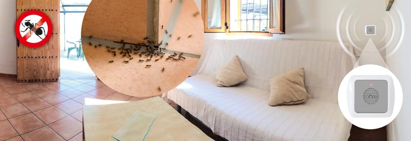 ameisen abwehr gardigo. Black Bedroom Furniture Sets. Home Design Ideas