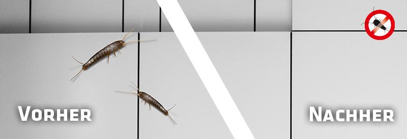 silberfisch abwehr gardigo. Black Bedroom Furniture Sets. Home Design Ideas