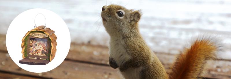 Eichhörnchen bar