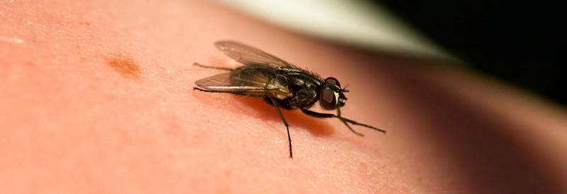 Fluginsekten vernichter 50 m isokat junior mit uv licht for Fliegen in blumenerde vernichten