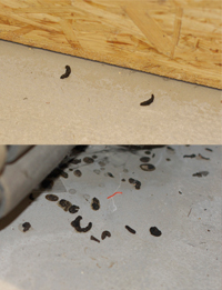 Mause Im Haus Keller Garage Und Dachboden
